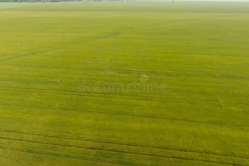 Grönt vete i fältet, bästa sikt med ett surr Textur av wheaen arkivbild