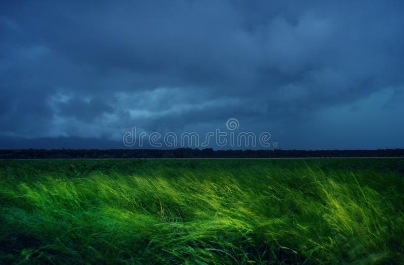 Grönt vetefält med stormiga regniga mörka moln över den västra slätten av Rumänien arkivbild