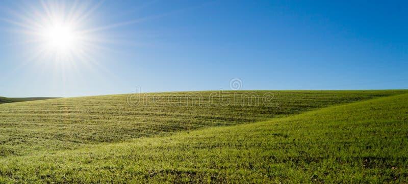 Grönt vetefält under morgonsolen royaltyfri fotografi