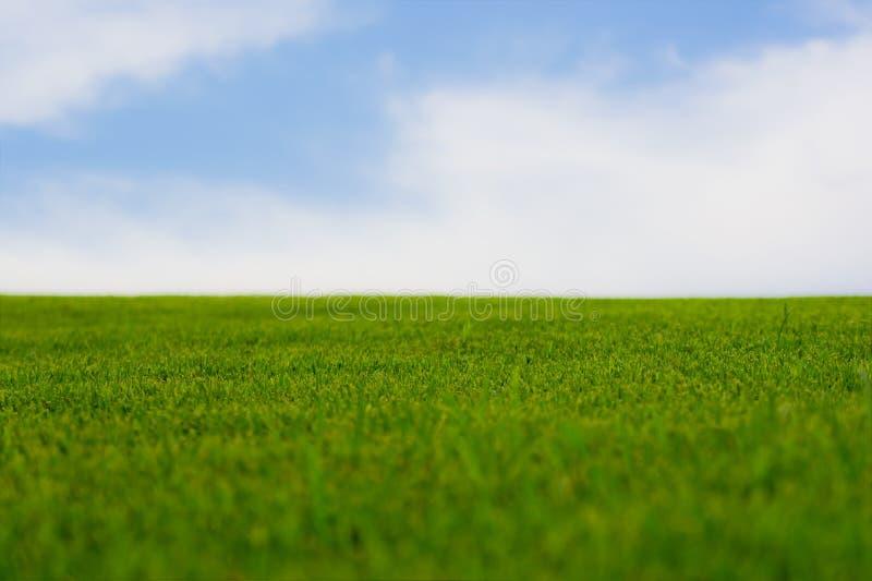 grönt vibrerande för gräs arkivfoto