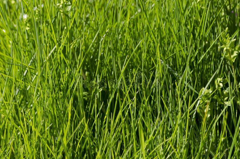 grönt vibrerande för gräs royaltyfri foto