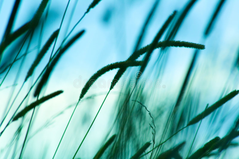 grönt wild för gräs royaltyfri foto