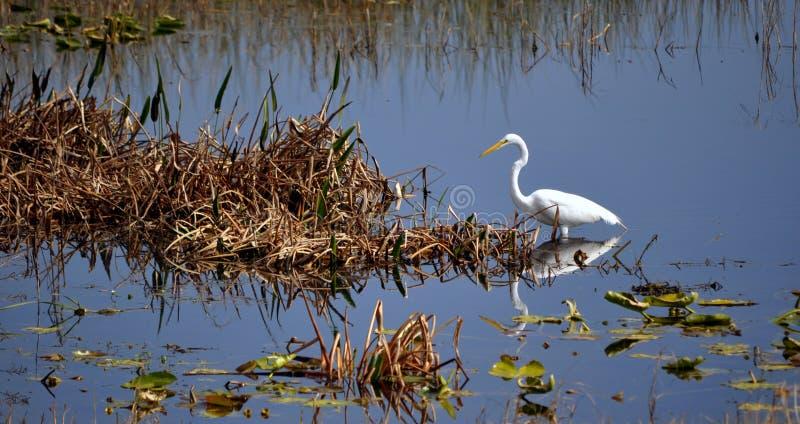 Grúa de la Florida foto de archivo