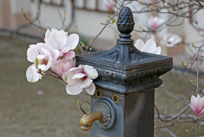 Grúa vieja del agua con el árbol floreciente de la magnolia fotografía de archivo libre de regalías