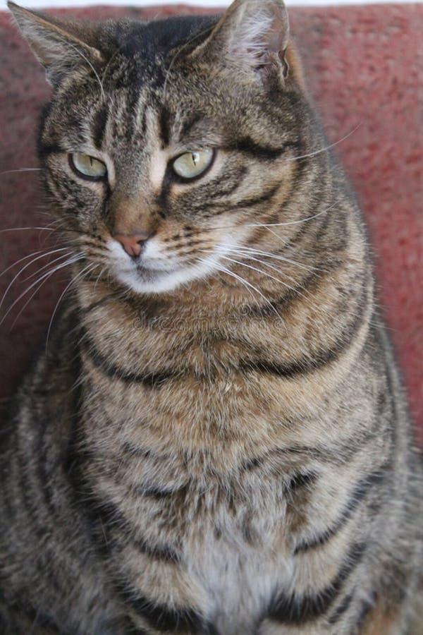 Grünäugige Katze stockbilder
