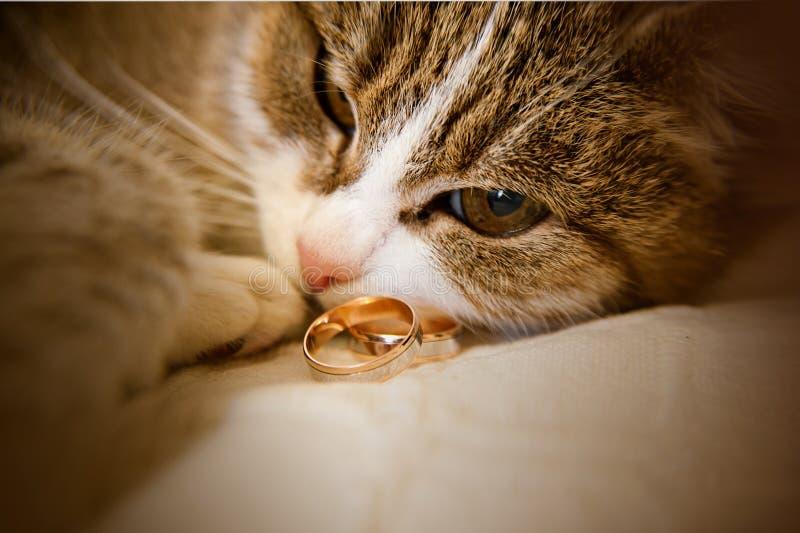 Grünäugige Katze liegt nahe bei Eheringen lizenzfreie stockfotografie