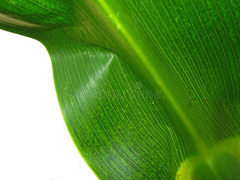 Grün lizenzfreies stockfoto