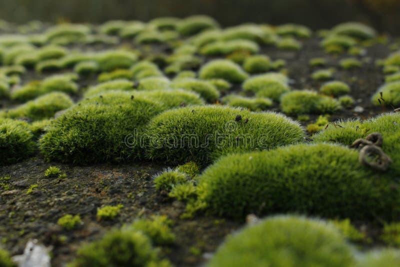 Grün lizenzfreie stockfotografie