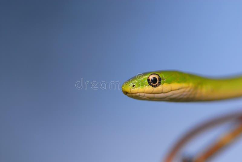 Download Grün auf Blau stockbild. Bild von clear, platz, reptil - 9089965