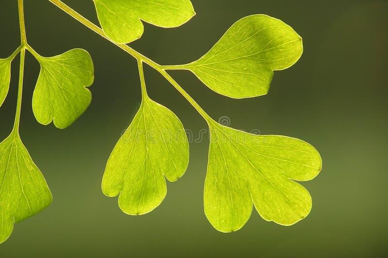 Grün auf Grün lizenzfreies stockbild