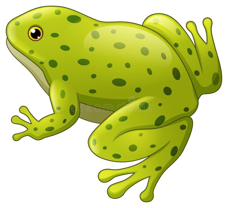 Grün beschmutzte den Frosch, der auf weißem Hintergrund lokalisiert wurde lizenzfreie abbildung