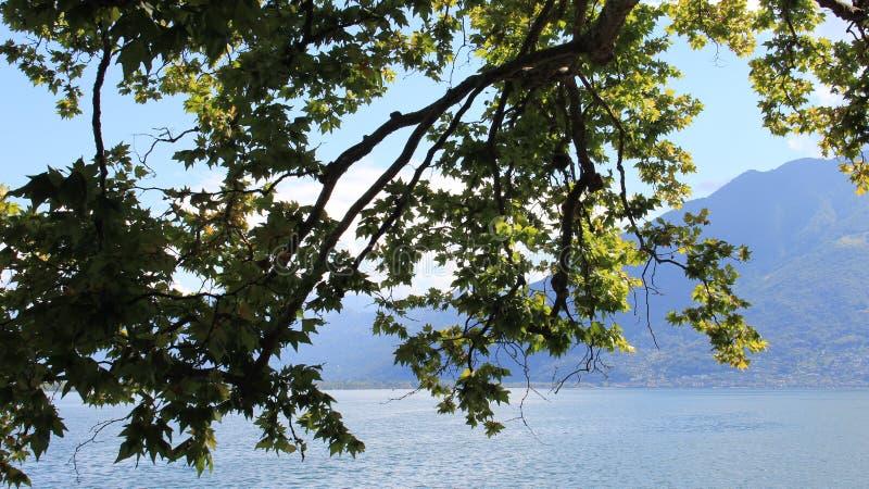 Grün-Blätter und Seeblick stockfotos