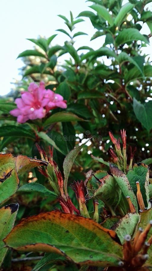 Grün Blätter Warmer Sommer-Tag Das Ende des Sommers Blühender Bush stockbilder