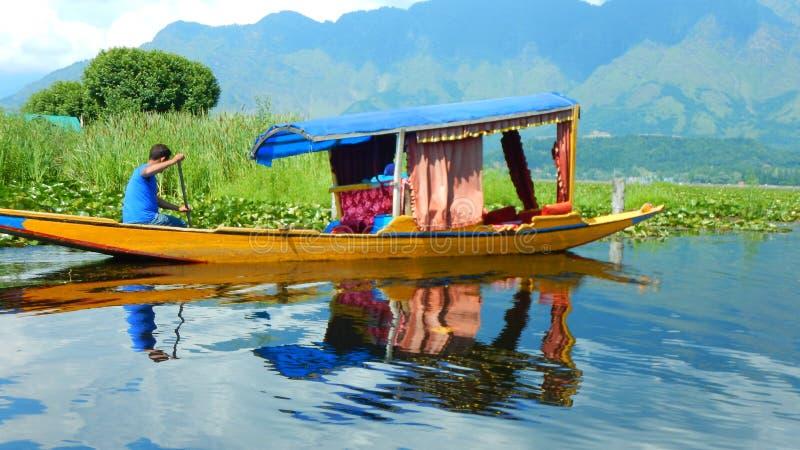 Grün in Dal Lake-3 stockfoto