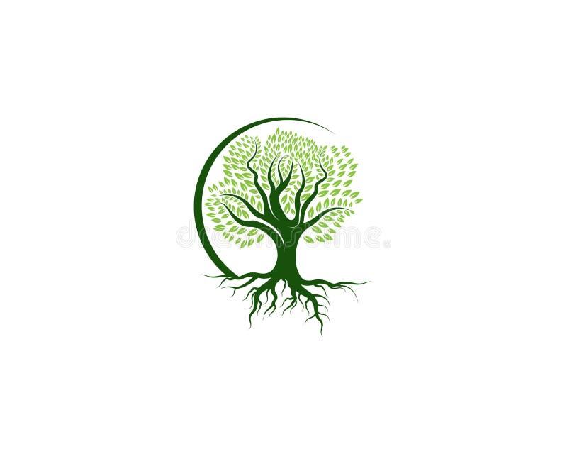 Grün des Baumblattlogoökologieelement-Naturvektors vektor abbildung
