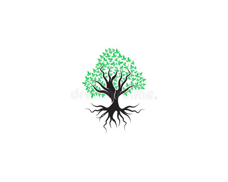 Grün des Baumblattlogoökologieelement-Naturvektors lizenzfreie abbildung