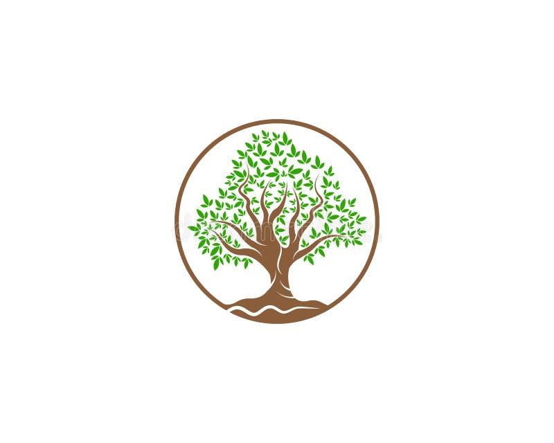 Grün des Baumblattlogoökologieelement-Naturvektors stock abbildung