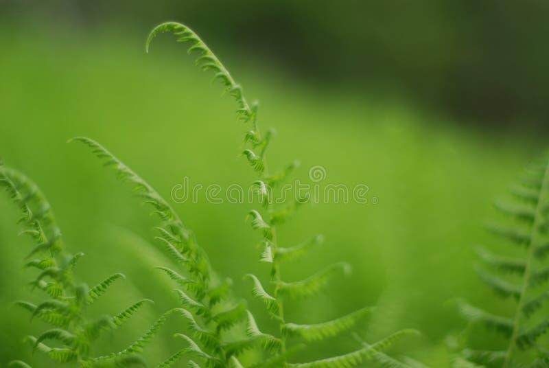 Grün in einem Meer des Grüns stockbilder