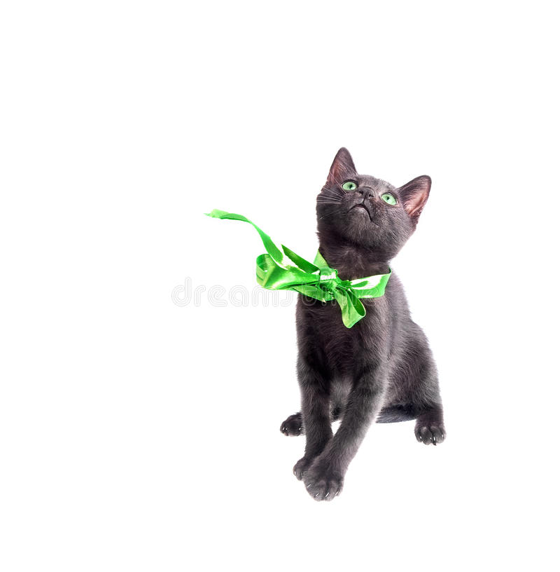Grün gemustertes schwarzes Kätzchen lizenzfreie stockbilder