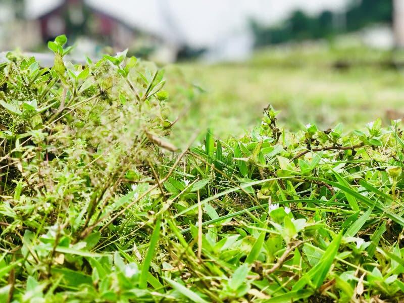 Grün ist Leben lizenzfreie stockfotografie