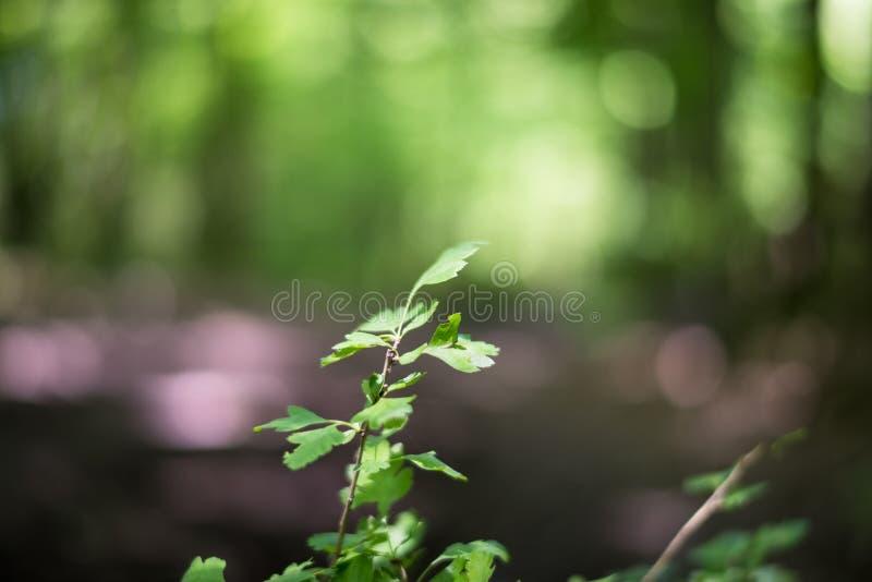 Grün lässt bokeh lizenzfreies stockfoto