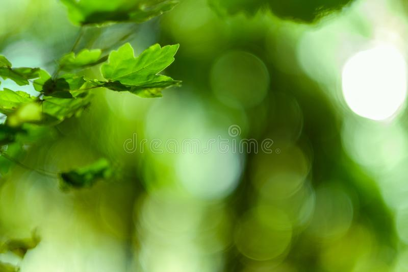 Grün lässt bokeh Licht-Naturhintergrund lizenzfreies stockbild