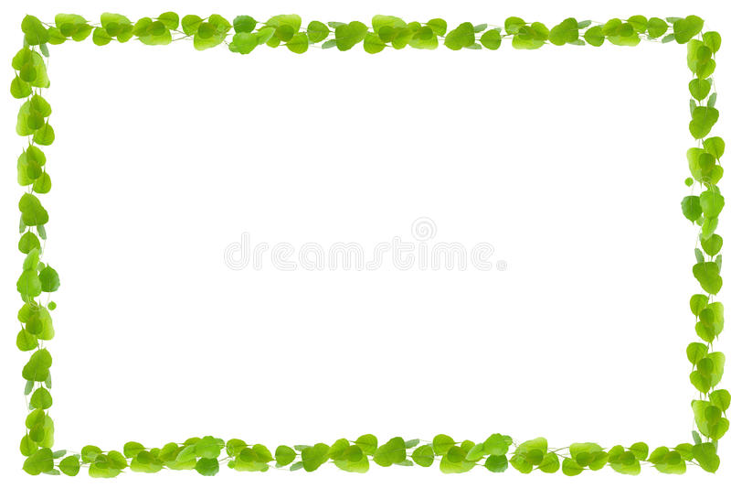 Grün lässt Feld auf weißem Hintergrund lizenzfreie abbildung