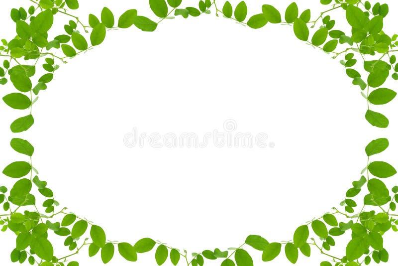 Grün lässt Feld getrennt auf weißem Hintergrund vektor abbildung