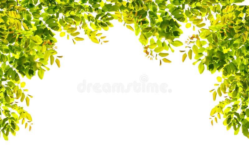 Grün lässt Grenznatur auf weißem Isolat lizenzfreie stockbilder