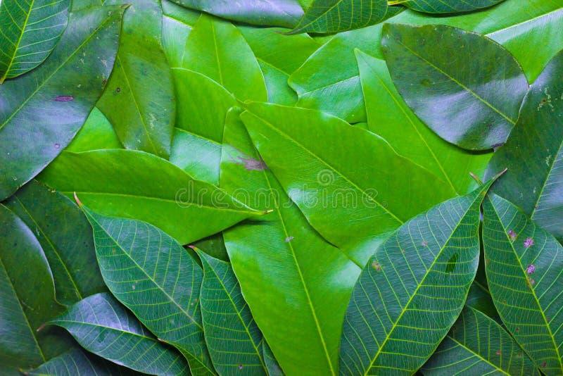 Grün lässt Hintergrund lizenzfreie stockfotos