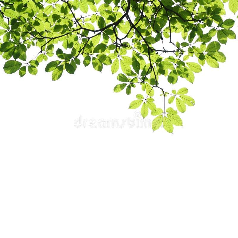 Grün lässt Hintergrund lizenzfreies stockfoto