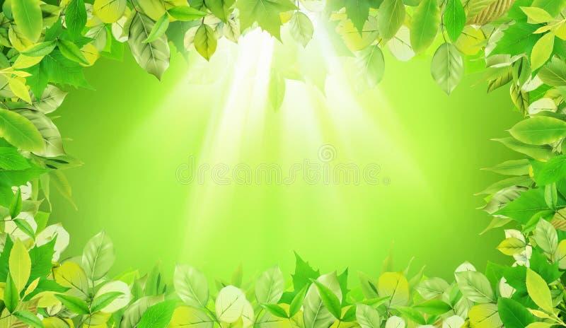 Grün lässt Hintergrund mit heller Reihe stockbild