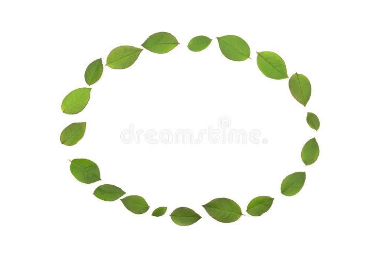 Grün lässt Kreis lokalisiert lizenzfreie stockbilder