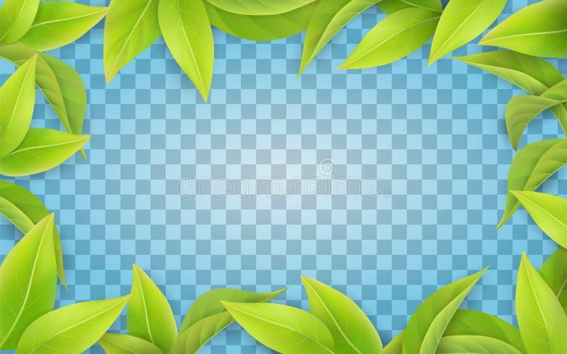 Grün lässt Rahmen auf transparentem Hintergrund vektor abbildung