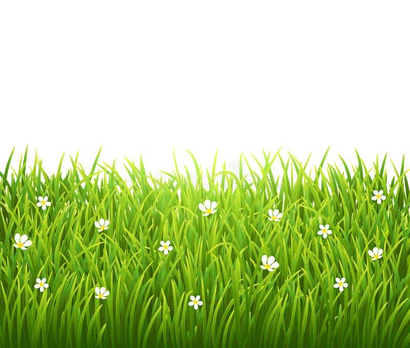 Grün lokalisiertes Gras mit Blumen auf Weiß stock abbildung