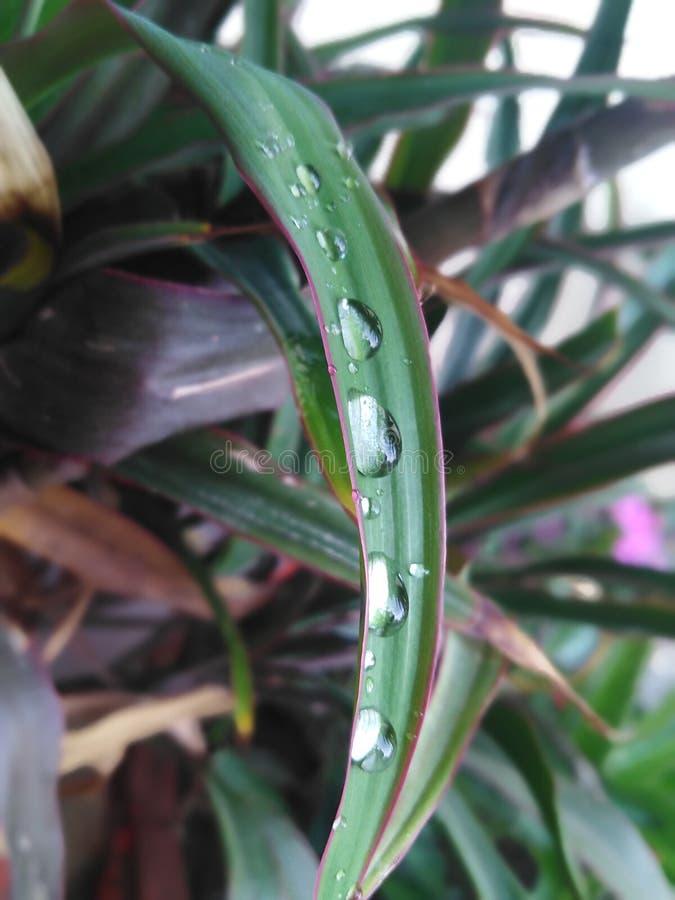 Grün, Naturliebhaber, Wassertröpfchen lizenzfreie stockfotos