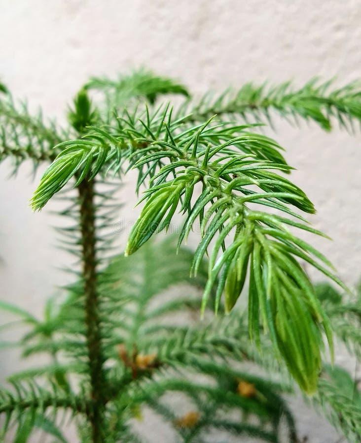 Grün pflanzen stockbilder