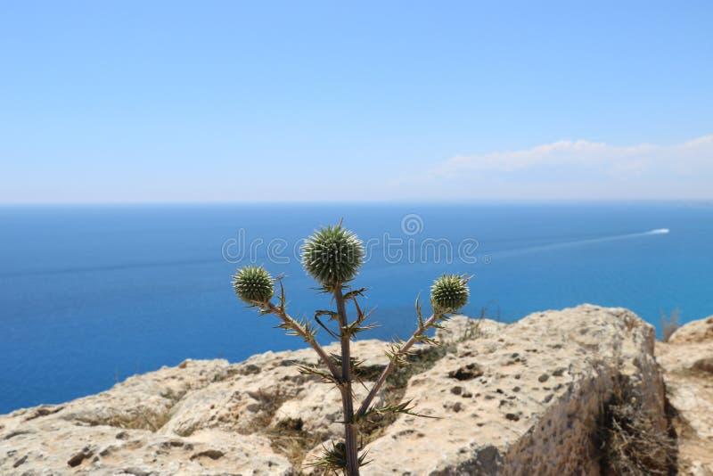 Grün in schönem Zypern stockbild