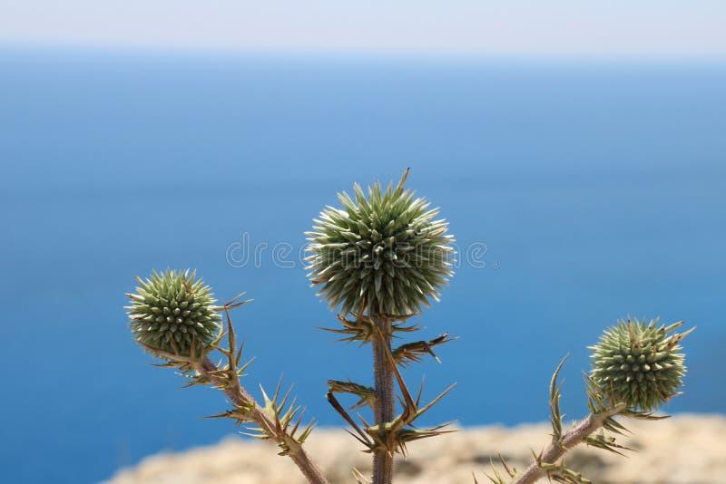 Grün in schönem Zypern stockbilder