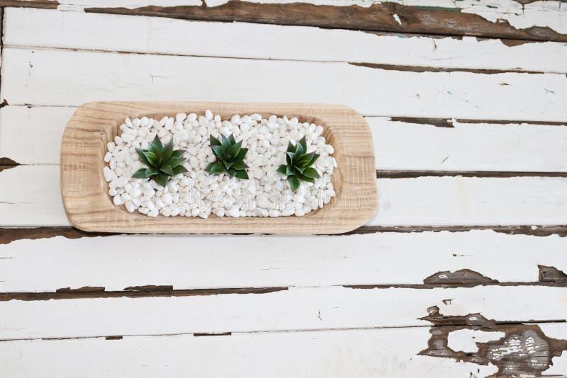 Grün Succulent in den weißen Kieseln mit Weinleseholzhintergrund lizenzfreie stockfotos