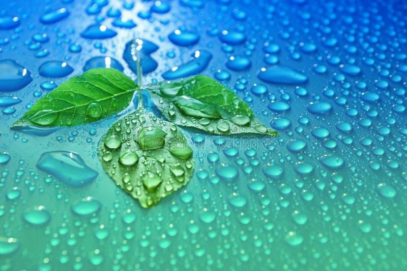 Grün verlässt auf Tropfenhintergrund-Ökologieenergie des blauen Wassers von Winkel des Leistungshebels stockfotos