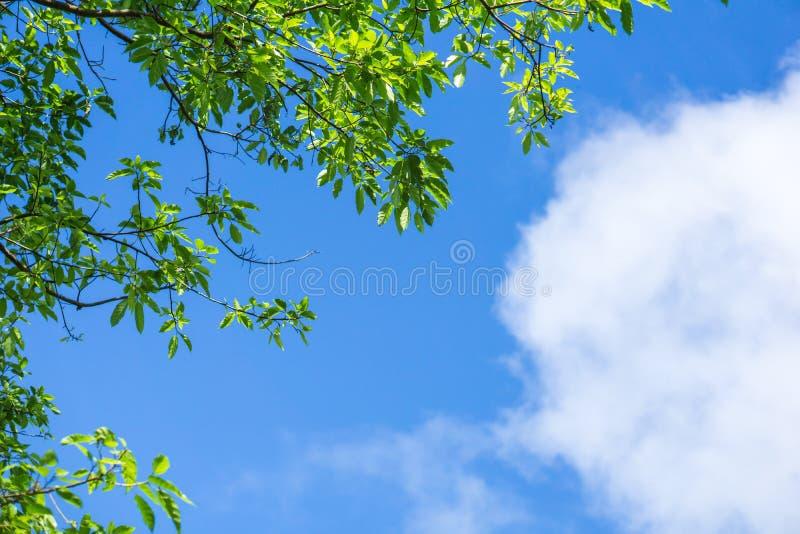 Grün verlässt gegen blauen Himmel und bewölkt Naturhintergrund, lizenzfreie stockfotos