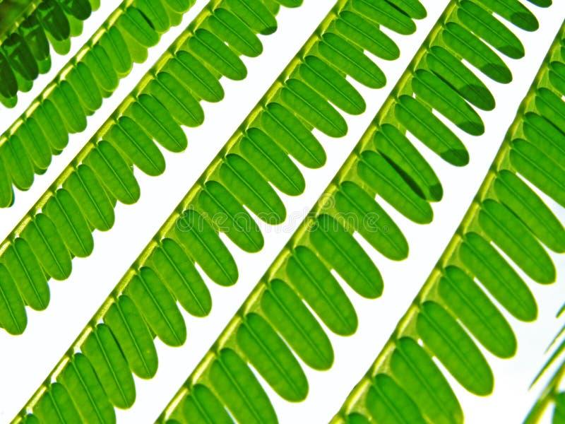 Grünblätter stockbilder