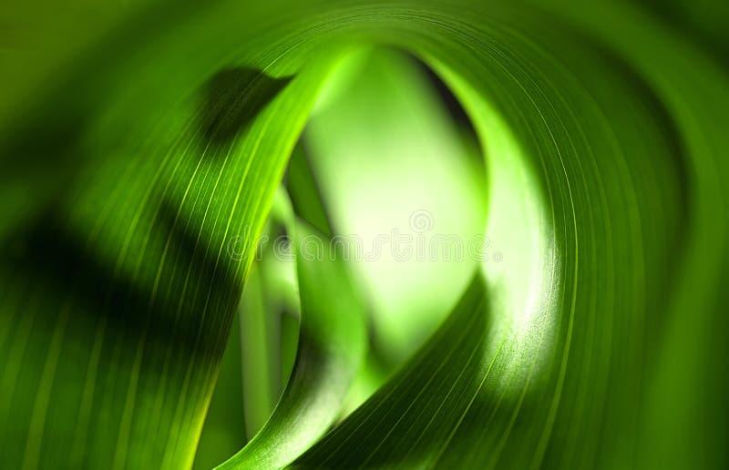 Grünblätter stockbild
