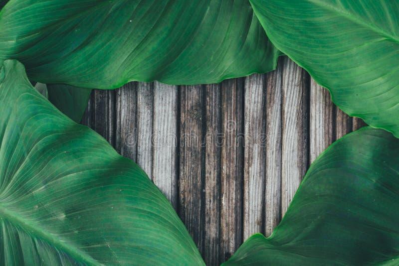 Grünblätter auf dem alten hölzernen Hintergrund stockfotografie