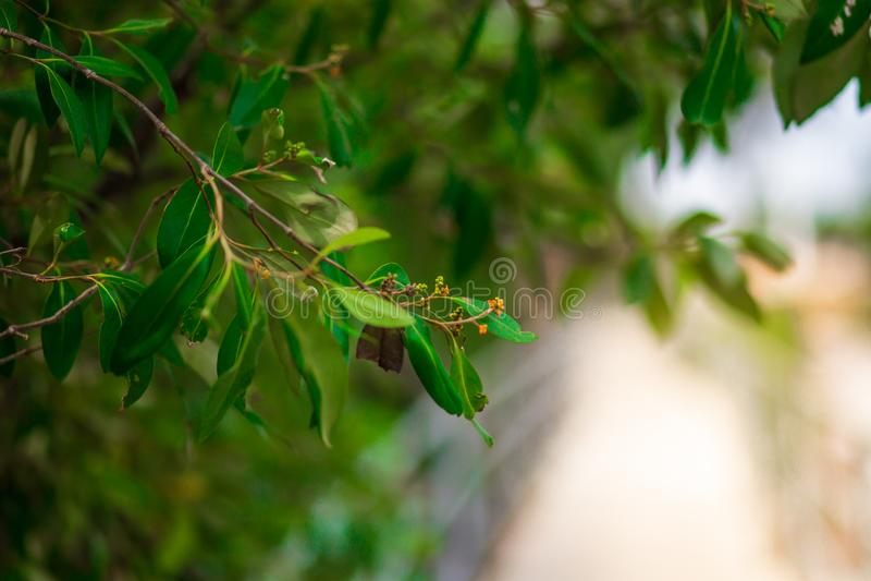 Grünblätter auf dem Frühlingsbaumhintergrund stockbilder