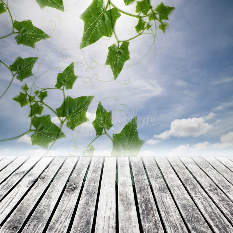 Grünblätter auf Himmelhintergrund vektor abbildung