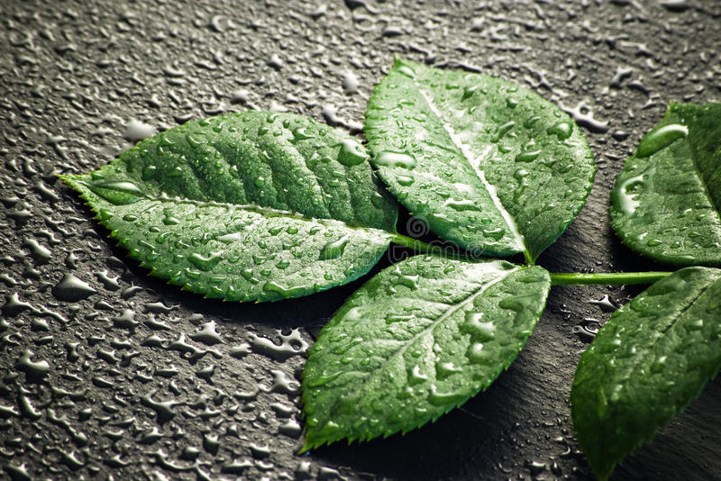 Grünblätter auf schwarzem Stein stockfotografie