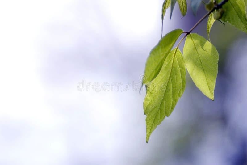Grünblätter, flacher Fokus lizenzfreie stockbilder