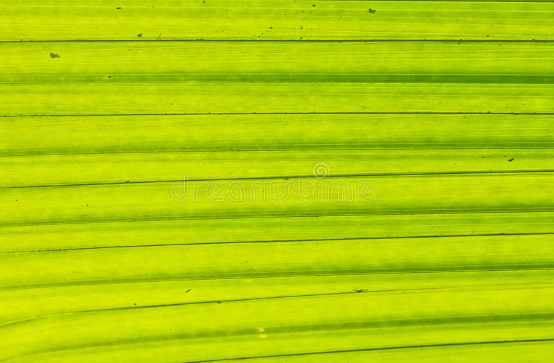 Grünblätter unter dem Licht stockbild